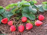 Tìm hiểu 3 cách trị nám da bằng trái cây từ thiên nhiên