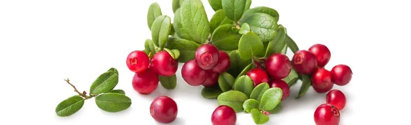 alpha arbutin chiết xuất từ bearberry mang lại hiệu quả cao gấp 10 lần thông thường